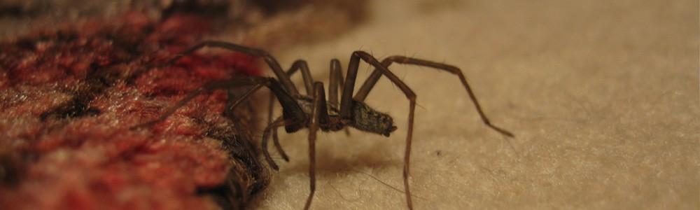 Eliminar arañas en Albacete