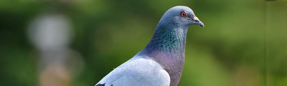 Eliminar aves en Albacete