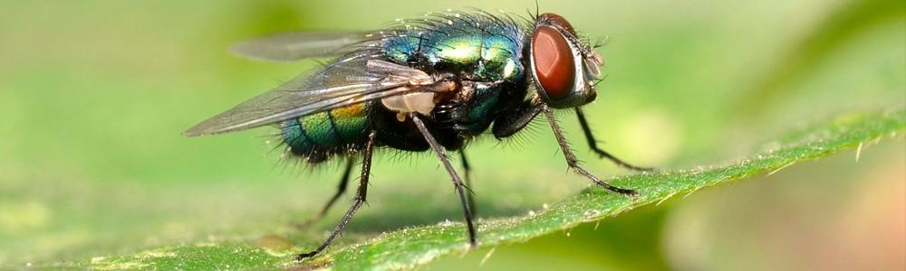Eliminar moscas en Albacete